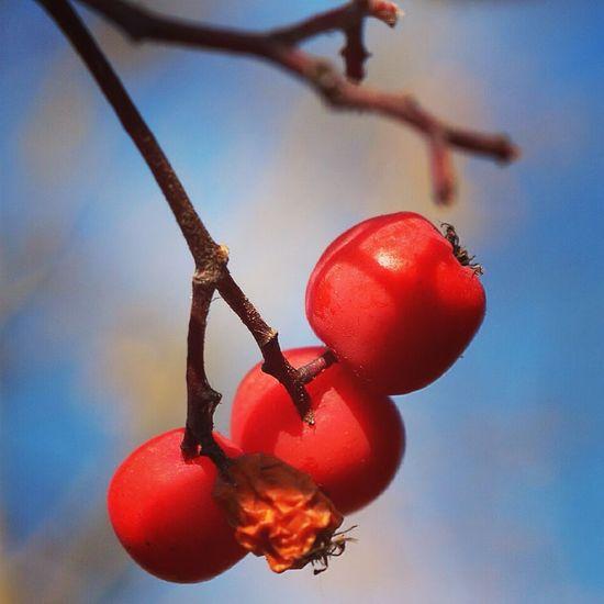 мои фото учусьфотать осень ягоды MyPhotography Taking Photos Follow Vscocam 10likes Likeforlike