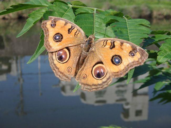 ちょうちょ Butterfly 蝶々 Kagoshima Marathon Picnic