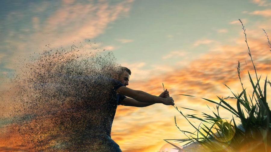 Digital composite image of man dissolving while holding plant during sunset