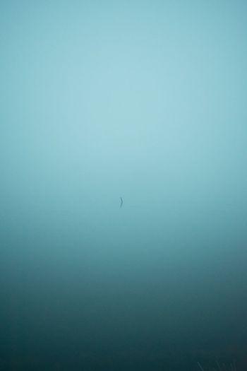 Bird in water against clear sky