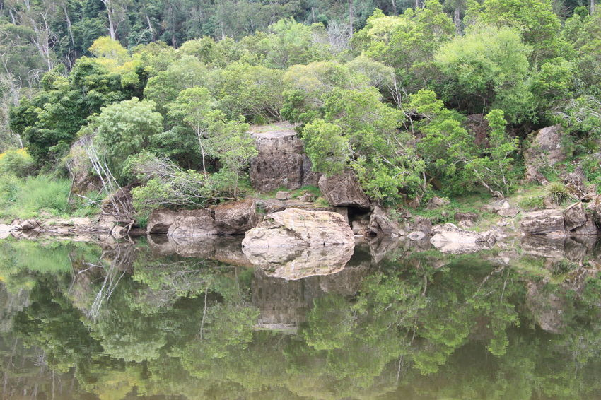 Serenity in the Victorian High Country, Australia Australian Bushland Beauty In Nature Day Green Color Growth Log Mesmerizing Mirror Reflection Nature No People Outdoors River Riverbank Rocks Rocks And Water Serenity In Nature Tree