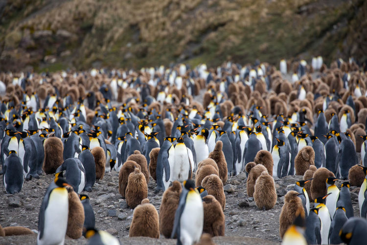 Penguins perching on beach