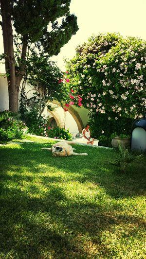 A Dogs Life Labrador Mahdia/Tunisia