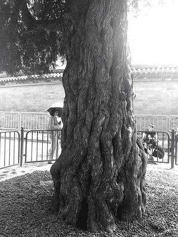 An old tree. Quality Time By Lemonni The Adventure Handbook