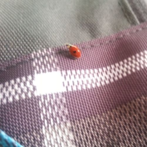 Well look who decided to join me on the way to the bookstore :-) Ladybug LadyBugLove