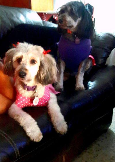 Mis Amoresperros Camila y Hannah 😍😍😍 Lovedogs