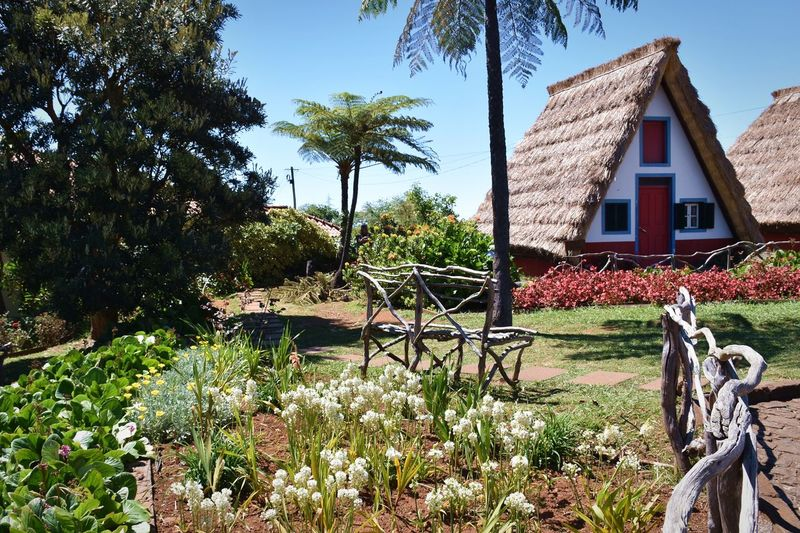 Plant Architecture Built Structure Building Exterior Tree Building Growth Nature Grass Day House No People Green Color Field Sky Land Outdoors Sunlight Fence Beauty In Nature Cottage Garden Garden Photography Tree Palm Tree Thatched Roof Traditional House Blue Sky Backgrounds Copy Space Santana Madeira Flower Preserved Home