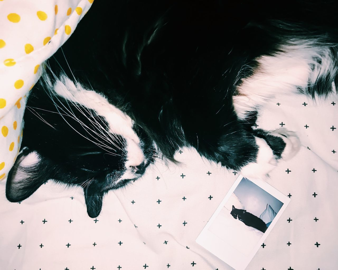 High angle view of cat sleeping next to photo of itsefl