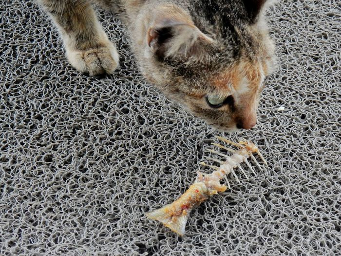 High angle view of cat by fish skeleton on rug