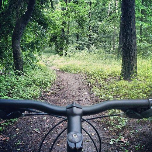 По последствиям мудаков-шашлычников, засирающих лес вело вело_фото Киев пуща bicycling insta_cycling kiev rain дневник_наблюдателя forest