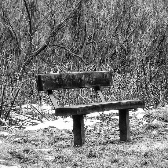 Saw this old bench in the middle of Daisy Nook Country Park it just seems to have character Hdr Edit HDR Hdr Photography EyeEm HDR Hdr_Collection Showcase March Fujifilm Phototgraphy Creative Light And Shadow Shades Of Grey Black And White Photography Monocrome Black And White Collection  Bnw_collection EyeEm Stilllife Black And White Portrait Benchporn Benches EyeEm Best Shots - Black + White Bnw Photography