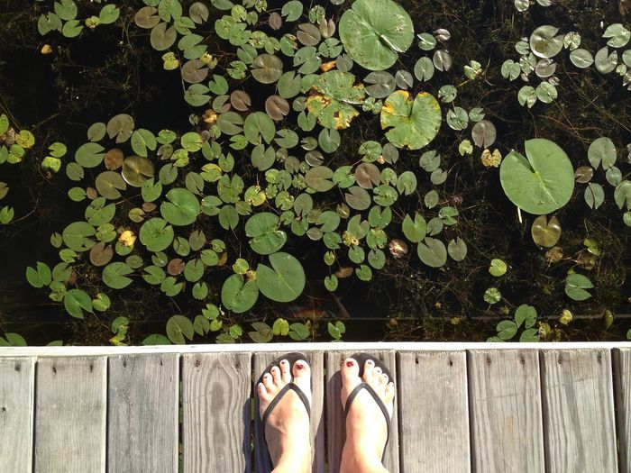 Boardwalk Brown Day Footwear Green Green Color Growth High Angle View Human Foot In Front Of Lake Leaf Low Section Outdoors Person Personal Perspective Plant Railing Shoe Standing Standing Water Water Wood Paneling