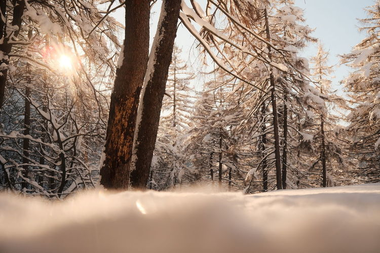 Sunlight streaming through trees in forest during winter