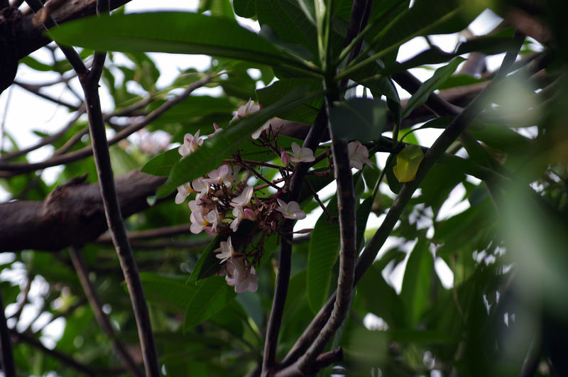 Low angle view of flowering plant