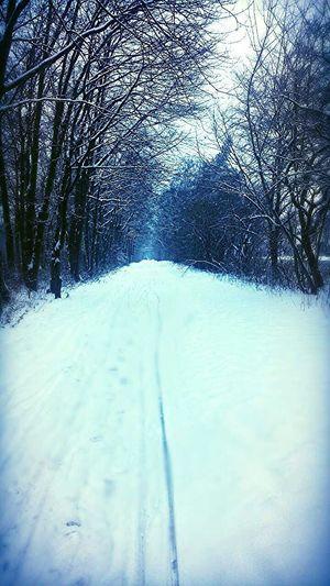 Snow ❄ Snow Winter Wonderland Cold Winter ❄⛄ Winter2014 Winter Trees Winterland Winter Snow Winter ♡♥♡♥