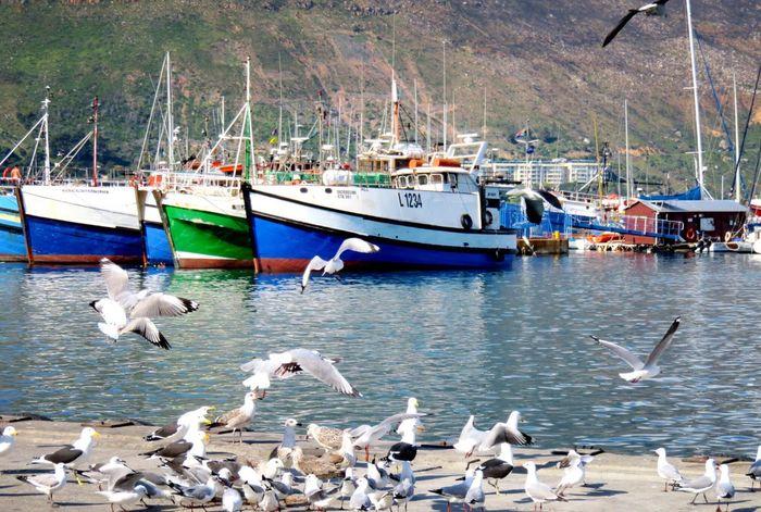 Hout Bay Campsbay Fishing Boat Wildlife