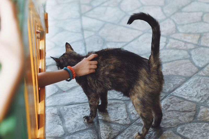 Pets One Animal Animal Themes Mammal Domestic Animals Domestic Cat Feline High Angle View Outdoors No People Day Full Frame Full Length Street Low Section Animal Cat Kitten Wild Homeless Outdoor Pet Owner Life Mammals Human Body Part
