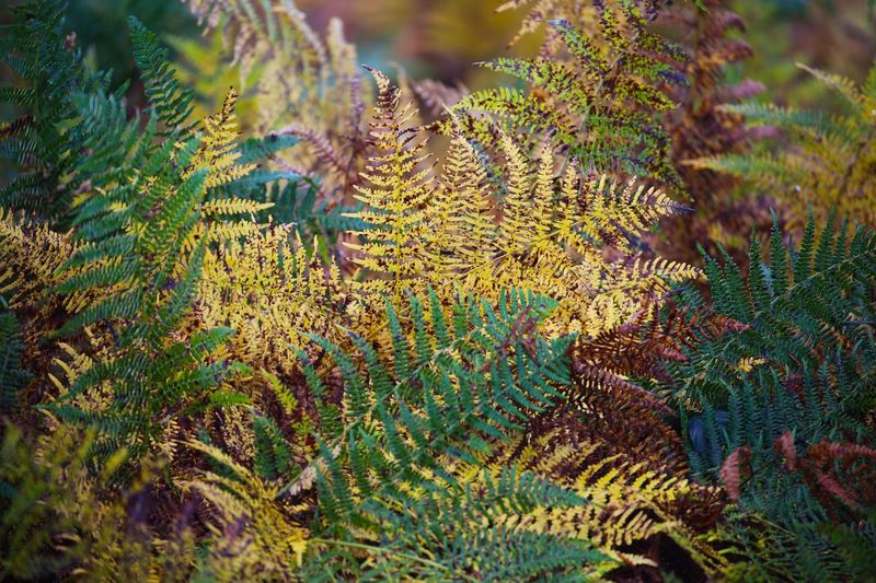 Changes... Autumn Colours Bracken Plant Growth Beauty In Nature No People Nature Tranquility Green Color Close-up Plant Part Leaf Focus On Foreground Outdoors Day Freshness Botany