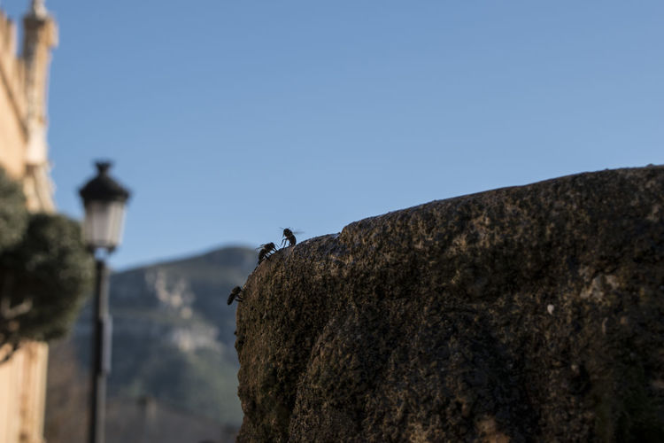 Low angle view of bird perching on rock against sky