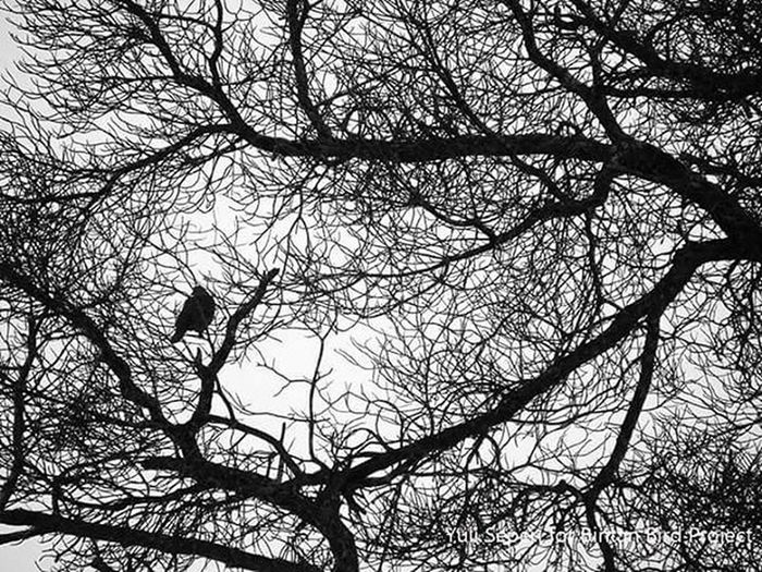 Hari ini motret Spotted dove (Streptopelia chinensis) aka Tekukur biasa. Tanjungpinang, 20 januari 201. OneBirdOneDay Bintan  BintanBirdProject 1000kata Wonderfulkepri  Tanjungpinang Kepri SijoriImages Yuliseperi Reportagespotlight taken with Sonycamera Sony H400 Hipaae Pfikepri Pewartafotoindonesia Instanusantara Instanusantarakepri