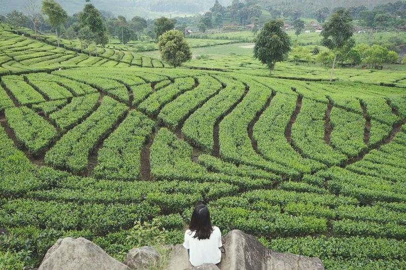 High Angle View Of Woman By Field