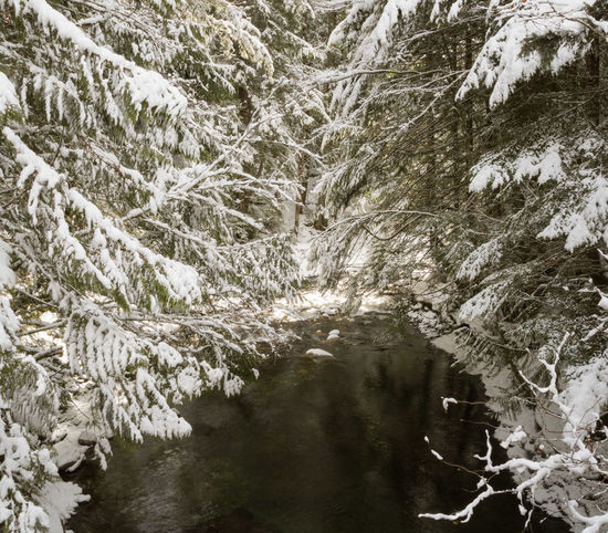 #beautifulbc #brandywine #rivertothefalls #supernaturalBC Beauty In Nature Cold Temperature Day Extreme Weather Forest Landscape Mountain Nature No People Outdoors Pinaceae Pine Tree Scenics Snow Snowing Tranquility Tree Weather Winter