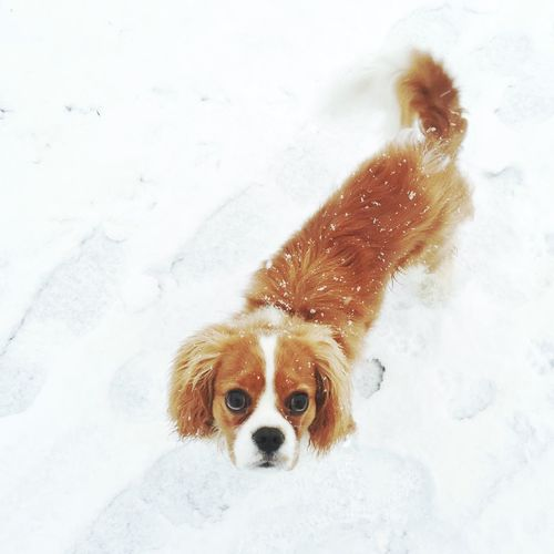 Portrait of a dog on snow covered field
