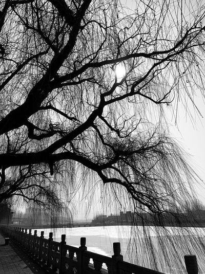 Nature Tree Water Silhouette Sky Day Branch Plant Beauty In Nature Tranquility Outdoors No People Lake Scenics - Nature Tranquil Scene Sunlight Waterfront Growth