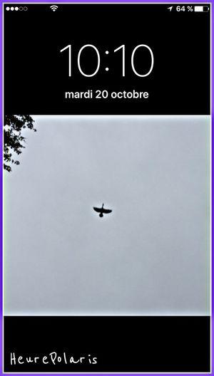 Le 20 octobre à 10H10 HEURE POLARIS Heure Hour Time Oiseau Bird Heron l'Esprit survole les Hommes qui n'y prêtent plus attention ! 🙏✨ Spirituel Spiritual