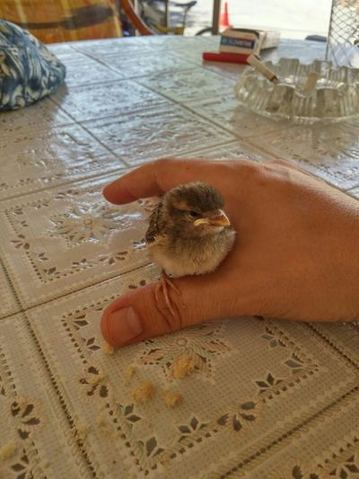 Birdie First Eyeem Photo