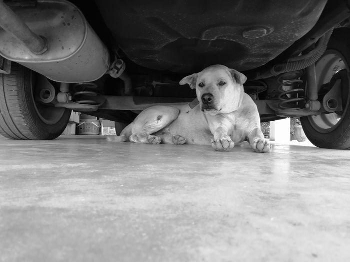 Dog Love Dog❤