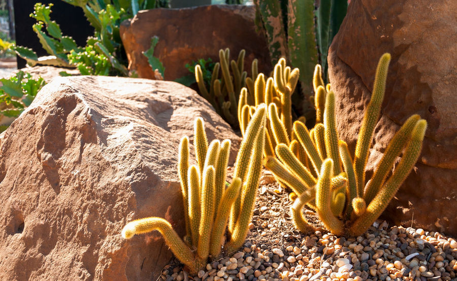 Decorative cactus in indoor garden Animal Animal Themes Animal Wildlife Animals In The Wild Beauty In Nature Cactus Close-up Day Growth Marine Nature No People Outdoors Plant Rock Rock - Object Sea Sea Life Solid Succulent Plant Sunlight Underwater