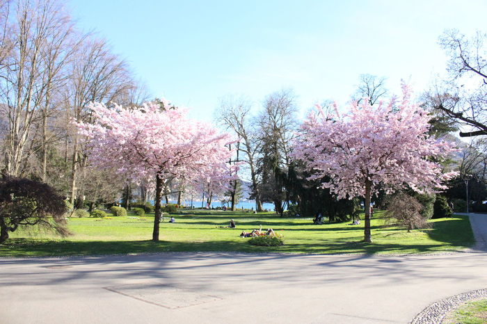 Spring time at Parco Ciani, Lugano, Switzerland Bare Tree Beauty In Nature Blossom Branch Cherry Tree Day Flower Fragility Grass Growth In Bloom Landscape Lawn Lugano Nature Outdoors Park Scenics Sky Sunlight Switzerland Tranquil Scene Tranquility Tree Tree Trunk