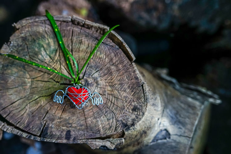 Close-up of butterfly on tree stump