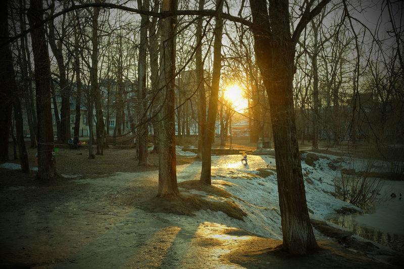 Day Landscape