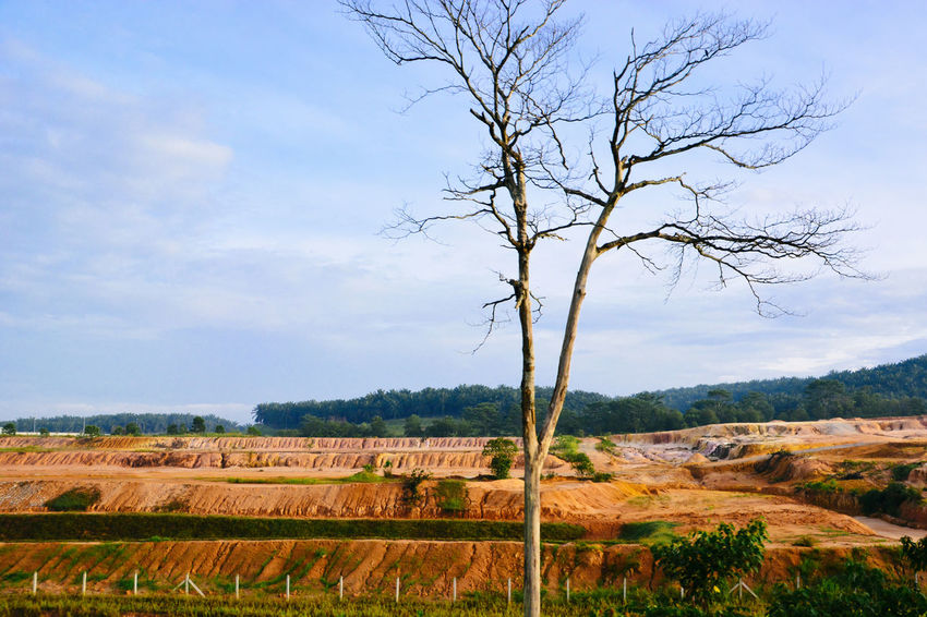 The place where is getting development soon and the tree stunning my heart Arid Climate Development Exploring Journal Landscape Lanscape Natural Beauty Non-urban Scene Outdoors Physical Geography The Week Of Eyeem Tree Trip Xhinmania Showcase March
