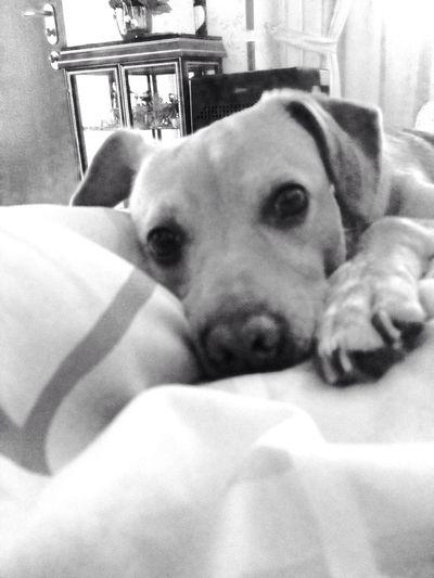 Black And White My Dog Cute ?❤️