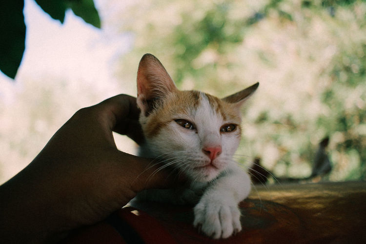 Cat on hand