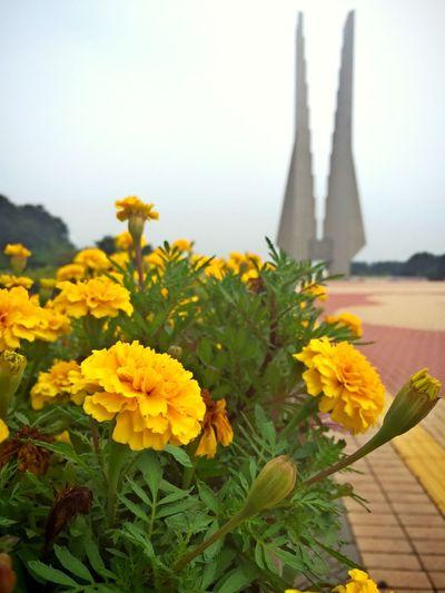 Flowers Chrysanthemum