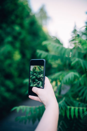 Cropped image of person photographing plants