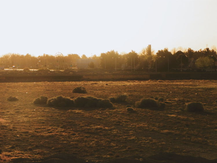 Beauty In Nature Clear Sky Copy Space Early Morning Field Field From My Point Of View Haze Idyllic Landscape Morning Nature No People Non-urban Scene Outdoors Rock - Object Sand Scenics Sky Sunlight Sunset Tranquil Scene Tranquility Tree Water