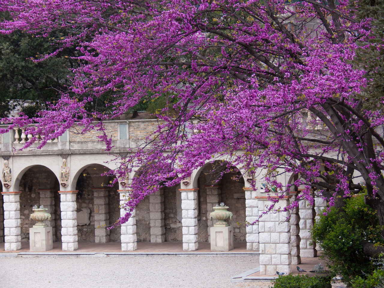 purple, arch, tree, flower, architecture, built structure, springtime, blossom, no people, growth, building exterior, pink color, fragility, outdoors, day, branch, nature, beauty in nature, freshness