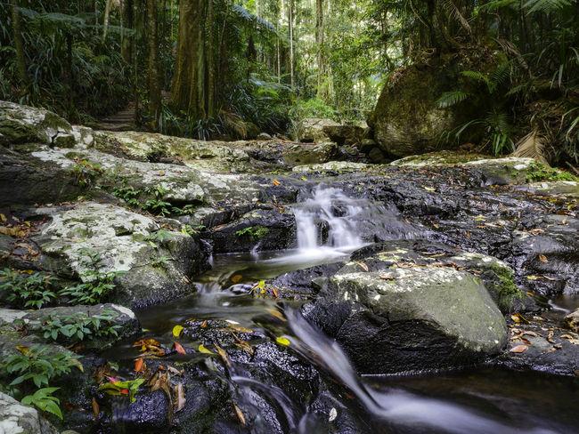 Beauty In Nature Day Flowing Water Forest Long Exposure Motion Nature No People Outdoors Rainforest Rainforest Australia Rainforest Walks Rapid River Rock - Object Scenics Stream - Flowing Water Tranquil Scene Tranquility Tree Water Waterfall