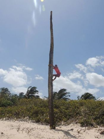 Share Your Adventure Brasilian Brasil Coconut Climbing Crazy Moments Adventure The Traveler - 2015 EyeEm Awards Happiness