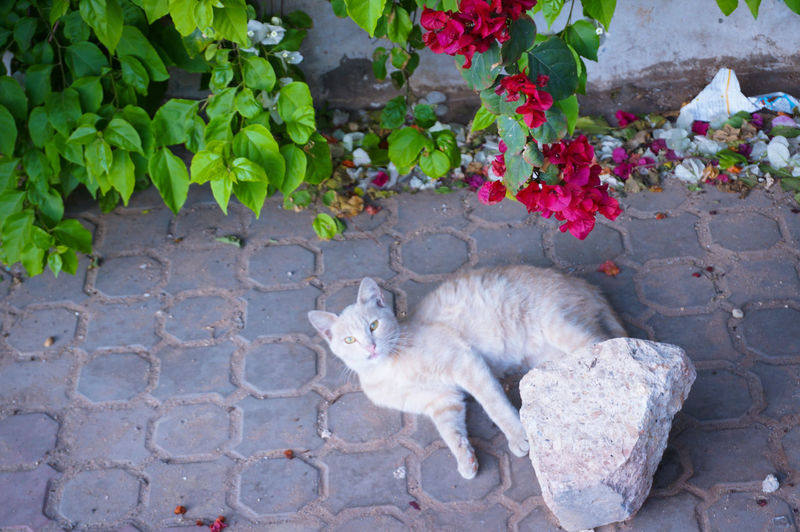 U still here 🐈 🌹 Cat Under The Tree Seniora Feline Animal Themes High Angle View Flower Plant Sitting Portrait Staring Staring At Me Staring At The Camera Confrontation Confronting Scene Mammal Freshness Snapshots Of Life Casual Cute Lovely Encounter Stranger On The Road Sweet