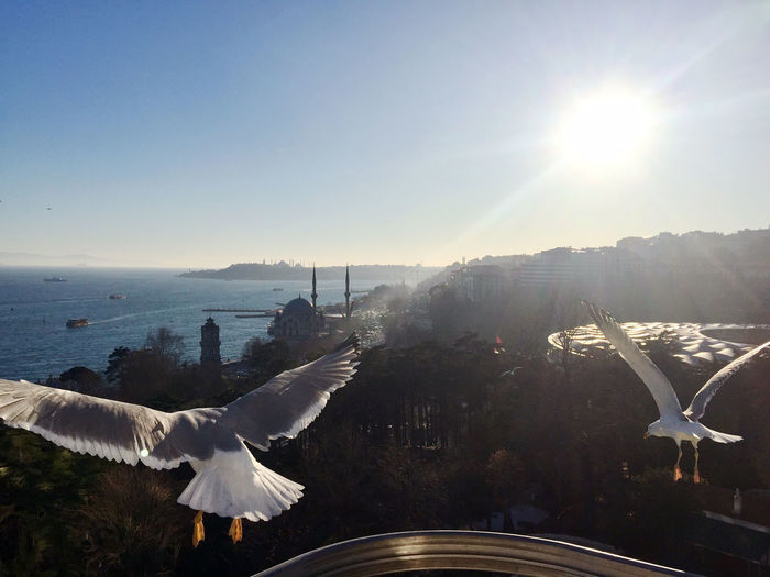 Amazing view of Istanbul, sea, bosporus and seagulls Istanbul Bird Flying Animal Themes Sky Sun Water Sunlight Sunbeam Day Seagull Lens Flare Outdoors No People Tourism Travel City Bosporus Vacations Amazing View Scenics Beauty In Nature Cityscape Skyline
