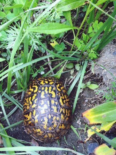 EyeEm Nature Lover Turtle
