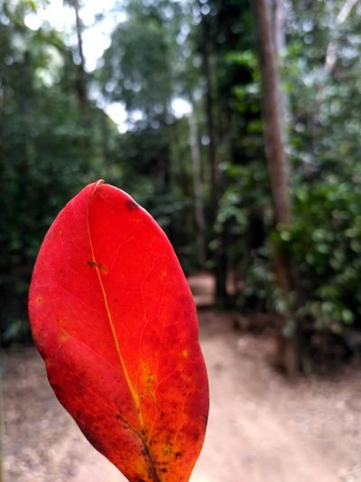 Into the woods. Red Tree Nature Outdoors Day Forest Close-up Sky Malaysia Texture Veins In Leaves Veins Contrast Red Bright