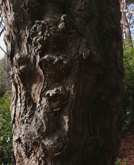 Tree Trunk Faces In Trees Tree Bark Close Up Tree Bark Patterns Tree Bark Texture Abstract Tree Patterns England, UK Samsung Galaxy S7