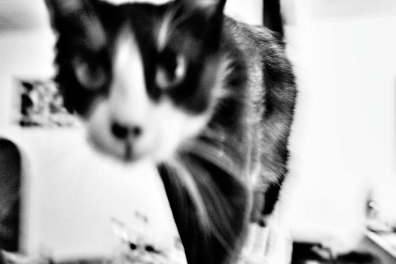 Cat Miaou Minou Psychocat Chat Psychedelic Animals Blackandwhite Blackandwhite Photography Monochrome Dark Darkness
